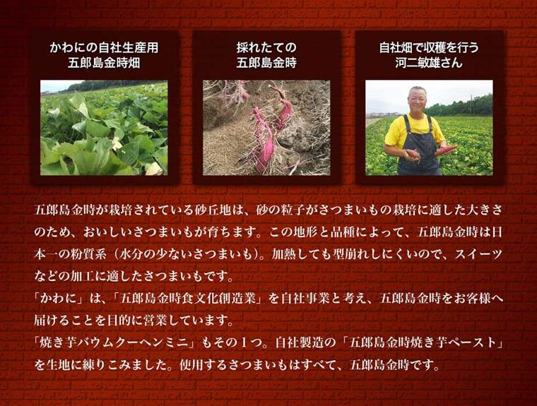 五郎島金時が栽培されている砂丘地は、砂の粒子がさつまいもの栽培に適した大きさのため、おいしいサツマイモが育ちます。この地形と品種によって、五郎島金時は日本一の粉質系(水分の少ない)さつまいも。加熱しても型くずれしにくいので、スイーツなどの加工に適したサツマイモです。「かわに」は「五郎島金時食文化創造業」を自社事業と考え、五郎島金時をお客様へ届けることを目的に営業しています。「焼き芋バウムクーヘンミニ」もそのひとつ、自社製造の「五郎島金時焼き芋ペースト」を記事に練り込みました。