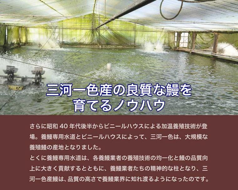 養鰻専用水道とビニールハウスに寄って、三河一色は養殖鰻の産地として有名になりました。専用水道は養鰻業者にとって、精神的な柱となり、三河一色産の鰻の品質向上を後押ししました。