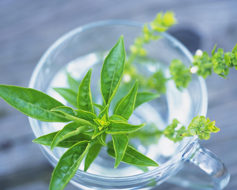 耕 野菜 できる 水 栽培