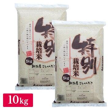 遠藤米穀 【精米】産地直送 特別栽培米 新潟産こしいぶき10kg(5kg×2)