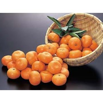 A25 坂本さんの有機栽培みかん 熊本県 約5kg 13000332