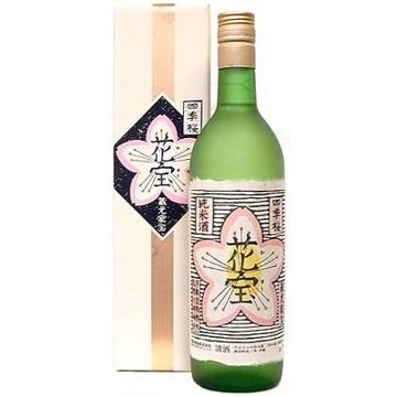 横倉本店 【栃木】四季桜(花宝)
